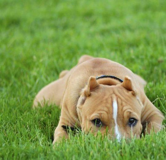 Dog Frequent Urination