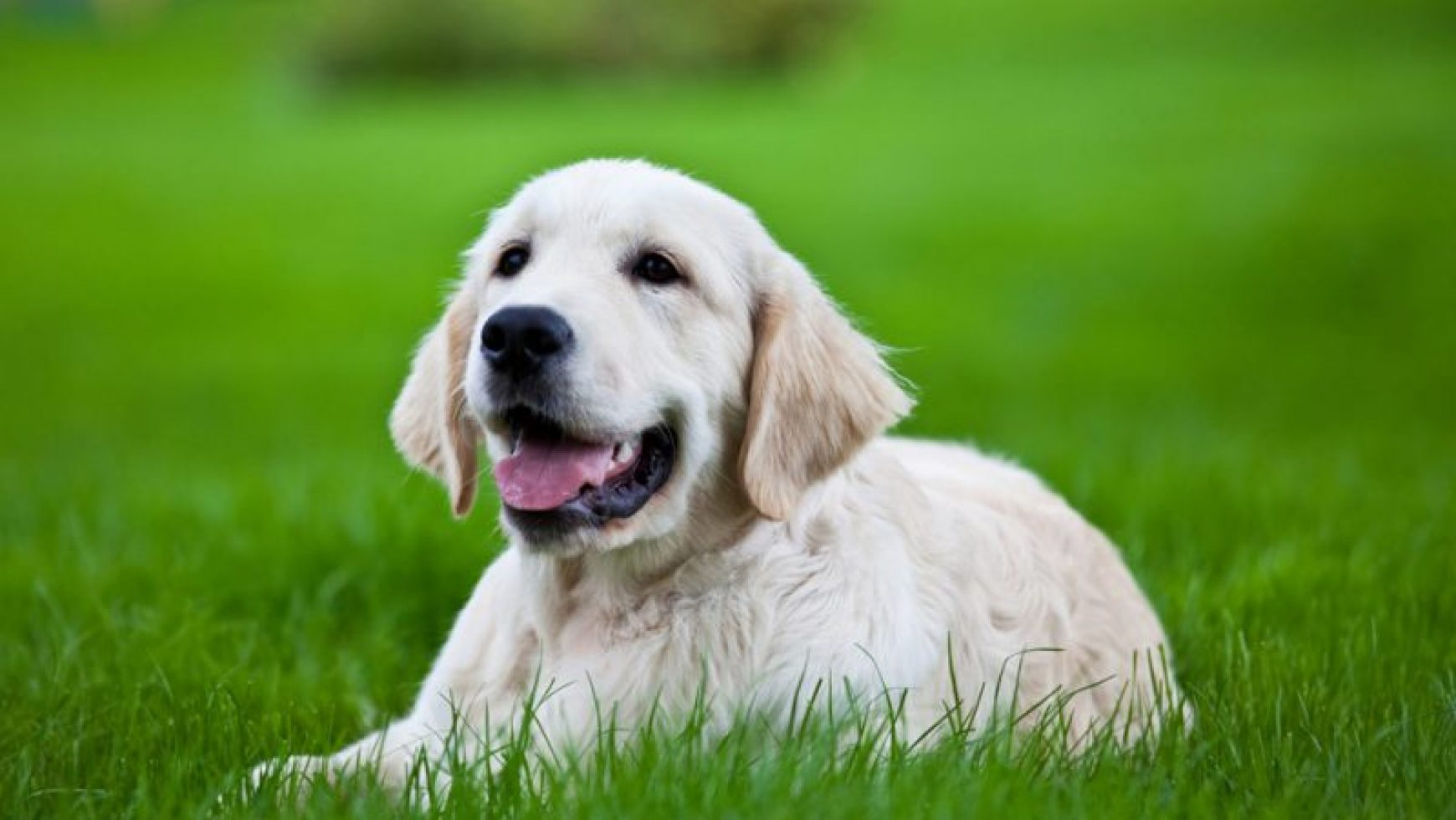 Cough Medicine for Dogs