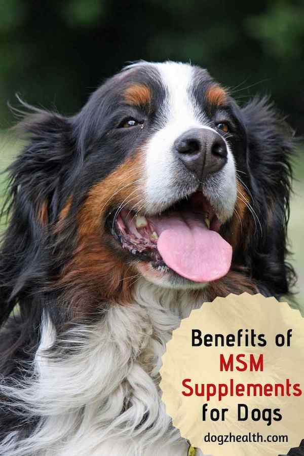 MSM for Dogs | Joint Supplement for Dogs | DogzHealth com