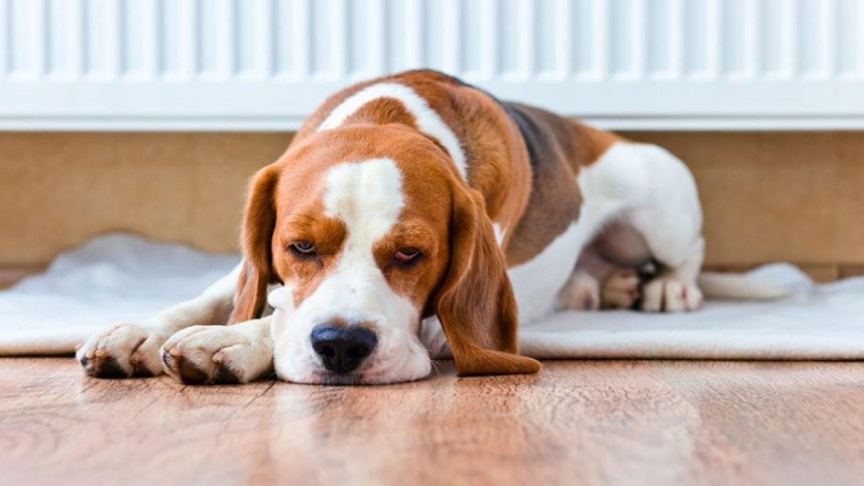 Sick Dog Symptoms
