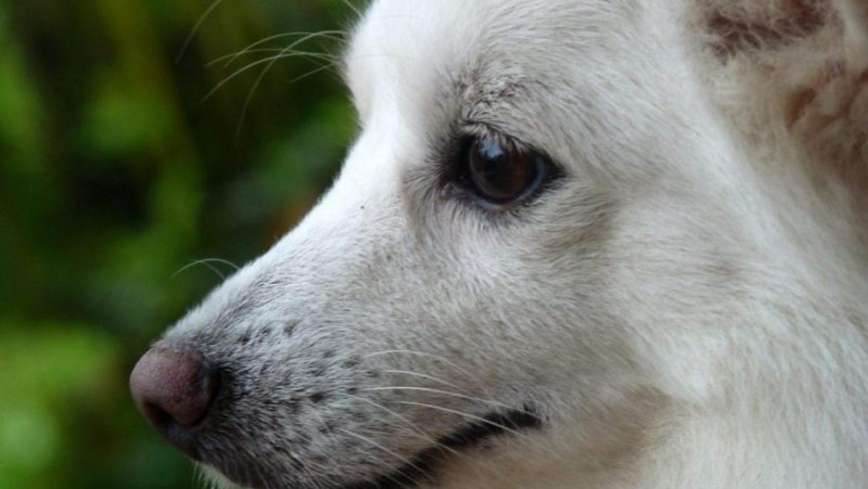 Bladder Cancer in Dogs
