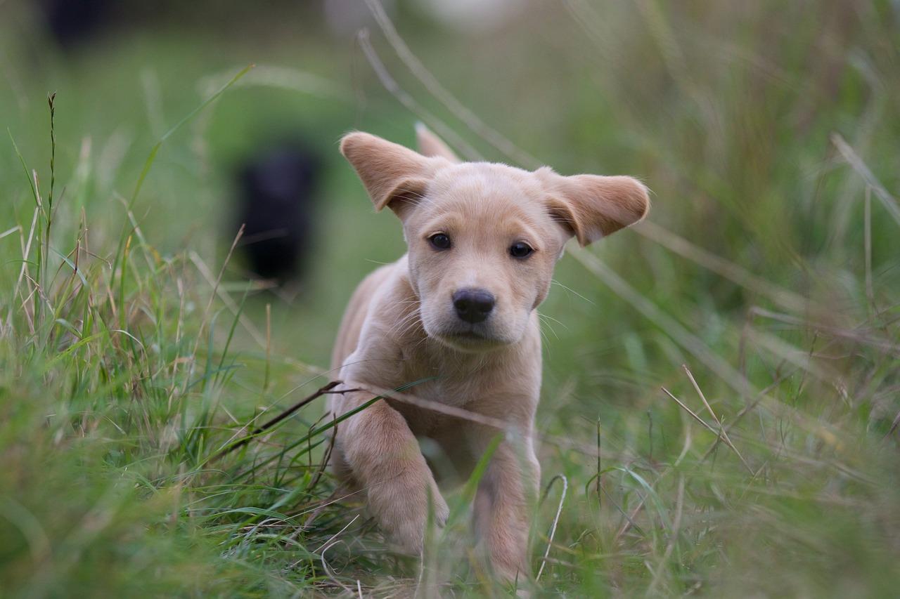 Common Dog Flea Medicine