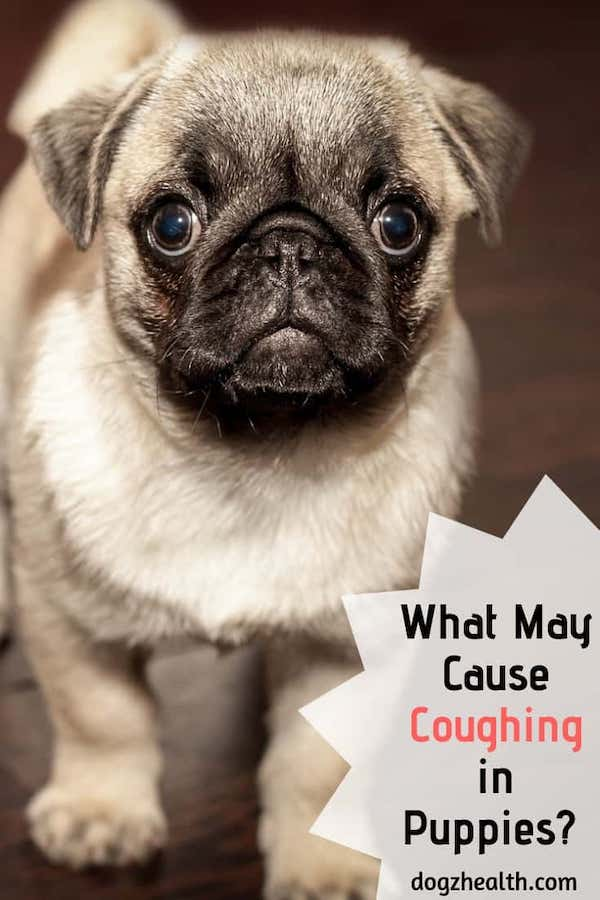 Puppy Coughing Causes
