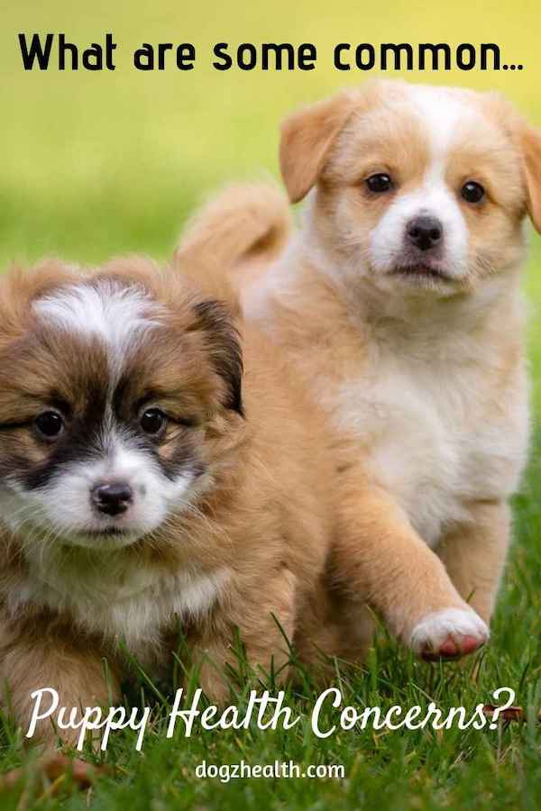 Common Puppy Health Concerns