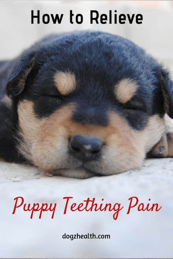 Relieve puppy teething pain