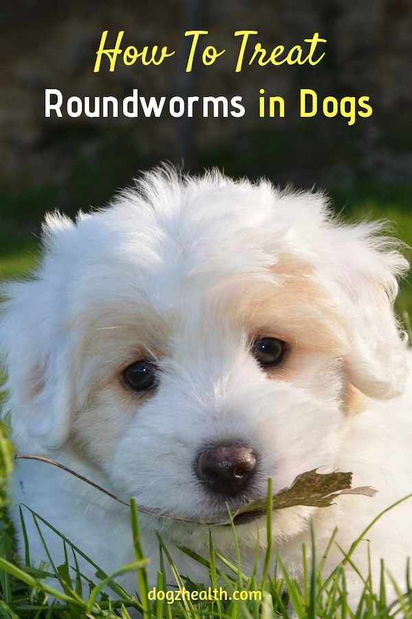 Treating Roundworms in Dogs