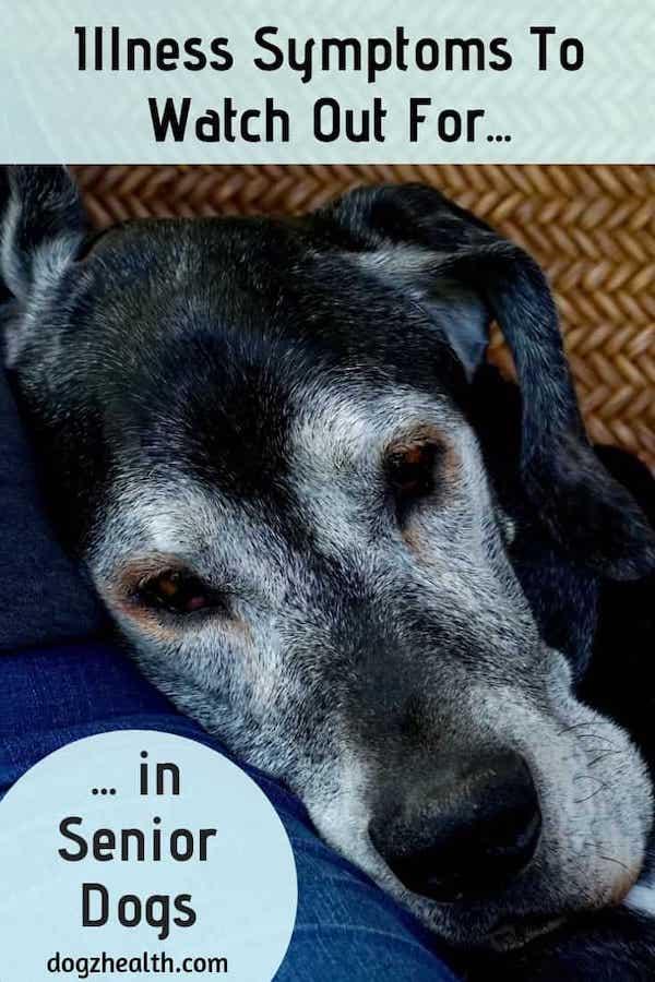 Senior Dog Health