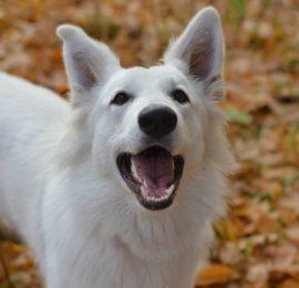 Dog Tick Medicine